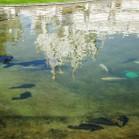 В озере у храма плавают рыбки