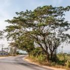 Дерево у дороги