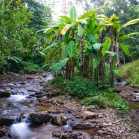 Лам Нам Кок - джунгли
