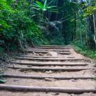 Лам Нам Кок - ступени из бамбука