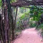 Лам Нам Кок - бамбуковые заросли